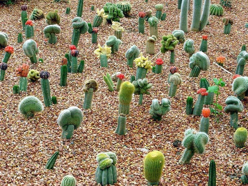 صور: نبات الصبار.. جمال رغم الأشواك,,!