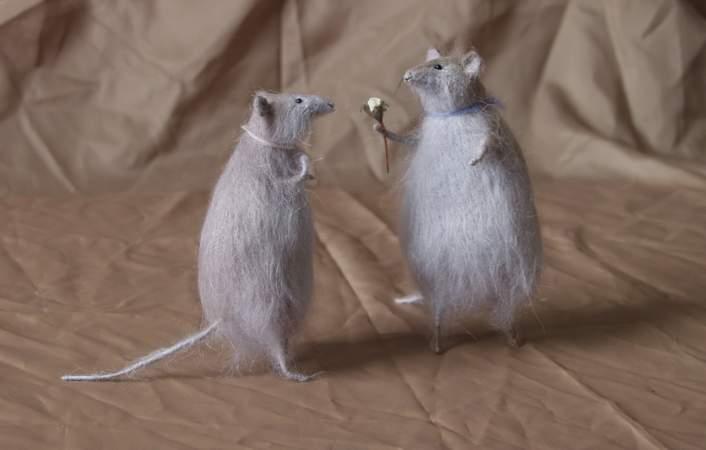 الفأر الرومنسي