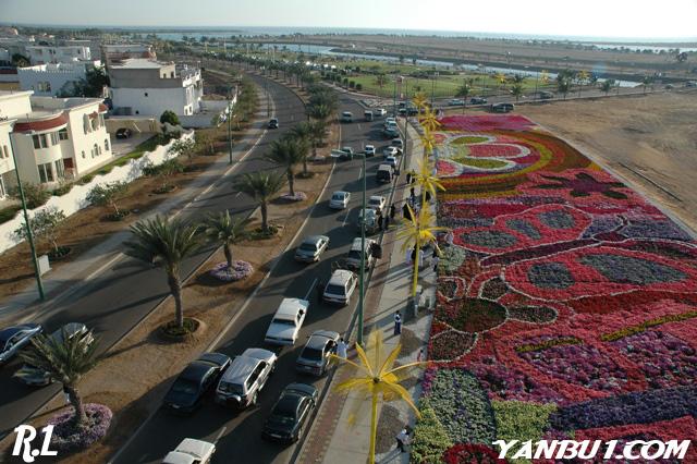 صور السجادة العملاقة بموقع مهرجان الزهور بمدينة ينبع الصناعيه