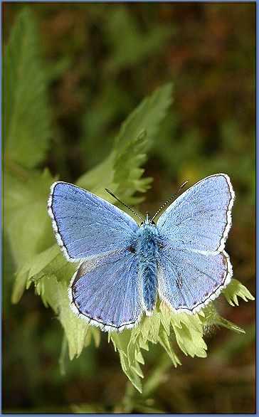 أزرق في أزرق