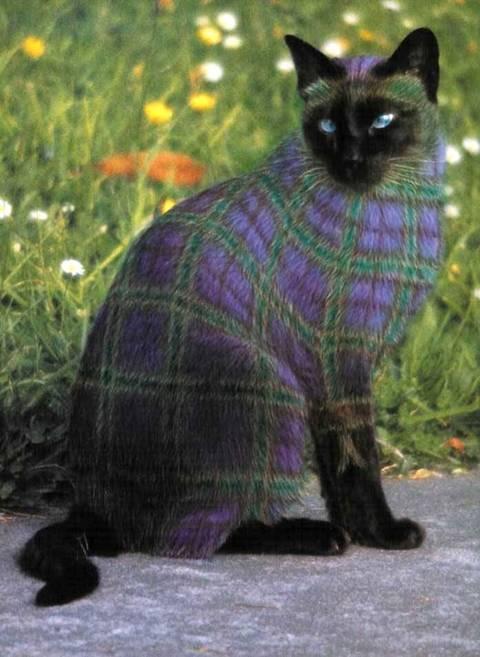 فن تلوين القطط
