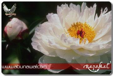 صور ورود زهور روعة