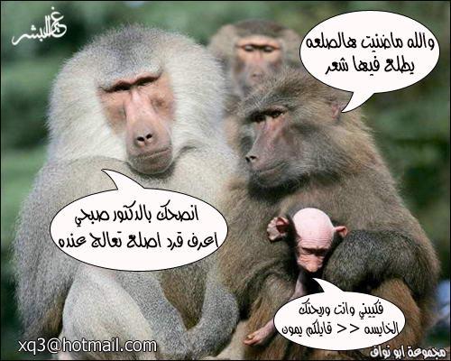معاناة احد القرود ههه