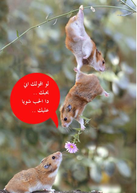 الحب ورمنسية عند الفئران