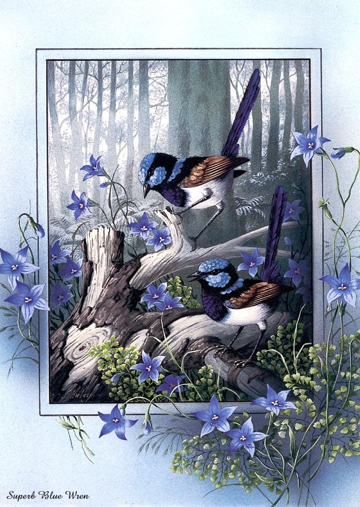 رسومات طيور جميلة