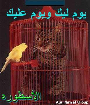 صور مضحكة وعليها تعليقات