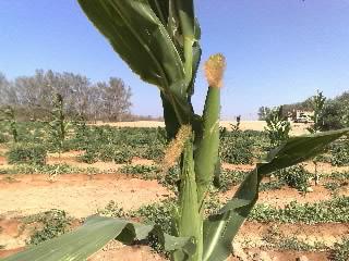 صور من مزرعتنا المتواضعة