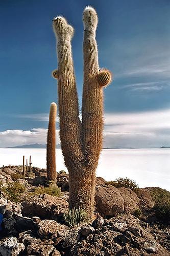 بحيرة الملح ببوليفيا..