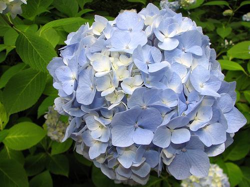 اجمل 13 زهرة فى العالم,,,
