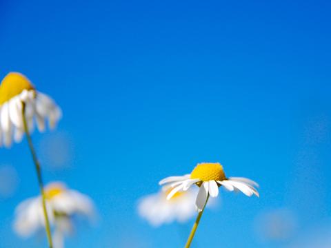 خلفيات طبيعة وسيارات وزهور وقلوب وبحار للبلاك بيري كيرف 2010 - اجمل واروع خلفيات