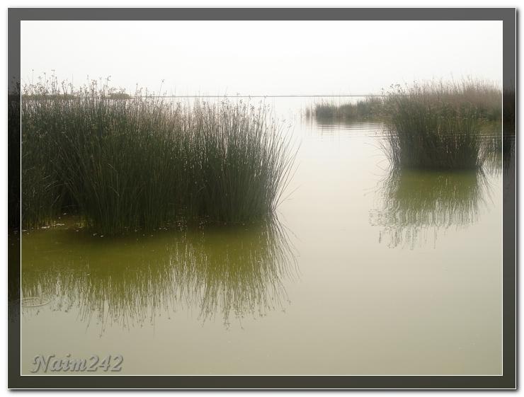 بحيرة الاصفر في الأحساء وسط الرمال