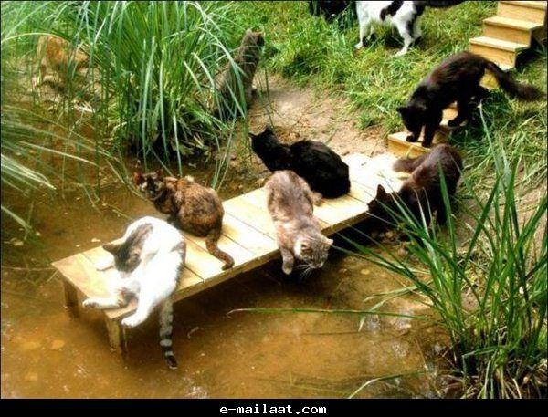 قرية القطط في اليابان