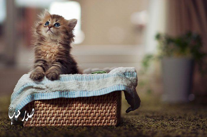 قطط مجنونة مضحكة