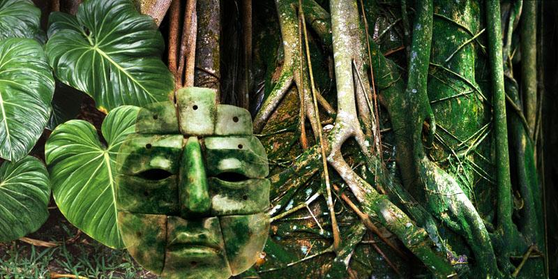 غابات الامازون في البرازيل
