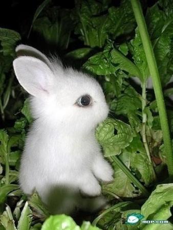 لنستقبل سنة الأرنب مع هذه الأرانب الصغيرة