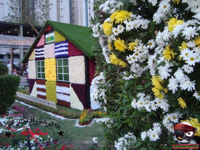 صور لبيت من الورد الطبيعي في مكة المكرمة ,,,,