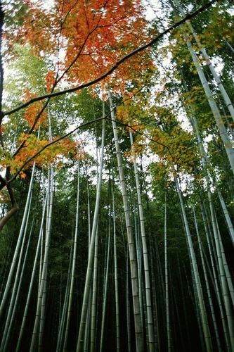京都 - kyōto