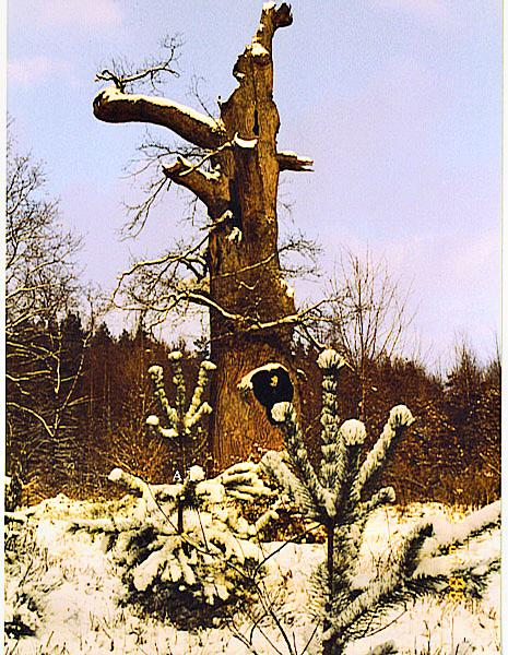 شجرة البلوط المقدسة ومصيرها المأساوي في مدينة ماربورغ الخضراء