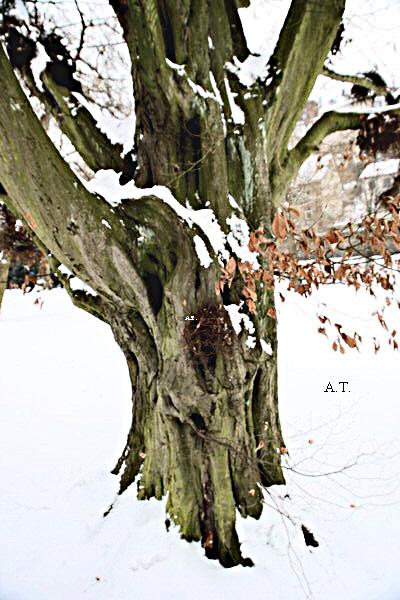 نزهتي في حديقة النباتات والأشجار القديمة في يوم 10 كانون الأول 2010