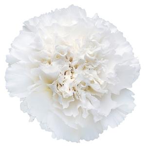 مجموعة جميلة من الزهور الرقيقة