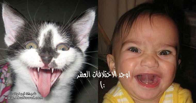 اضحك مع الصور ، صور مضحكة جديدة