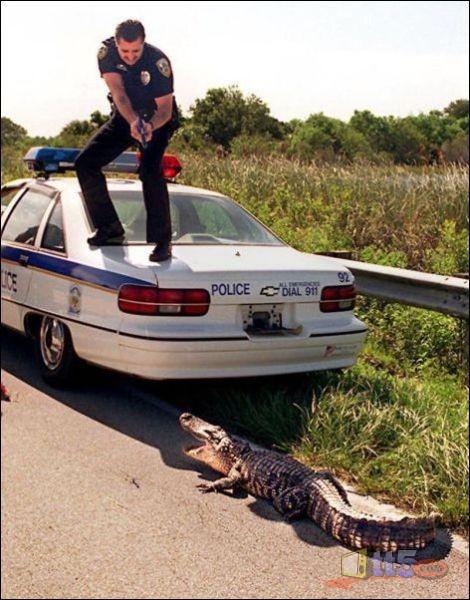 أضحك مع رجال الشرطة
