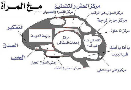 مقارنة بين مخ الرجل و مخ المرأة..
