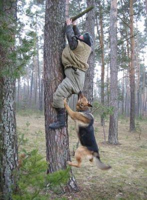 شاهد بالصور كيف تغضب بعض الحيوانات على البشر