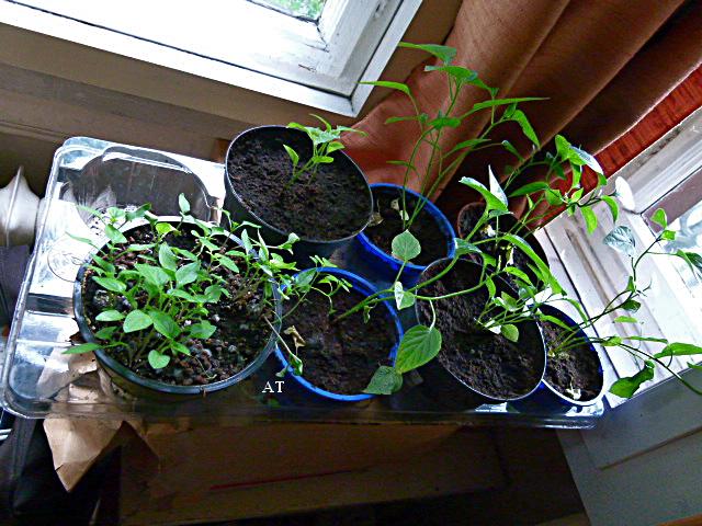 الفلاحة والزراعة النافعة في البيت الزجاجي