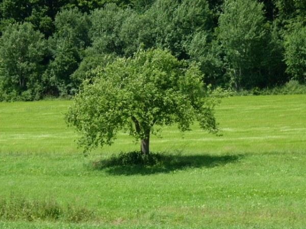 رحلتي الجميلة إلى المزارع القريبة من مدينتنا يوم 17 حزيران 2012