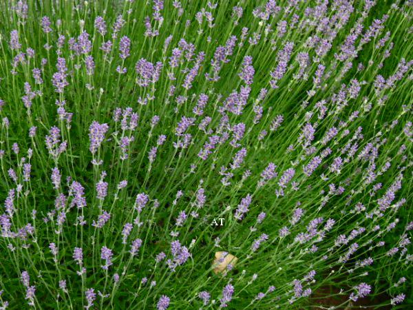 رحلتي الجميلة إلى حديقة الأعشاب وأزهار الخشخاش في قرية لانجن شتاين