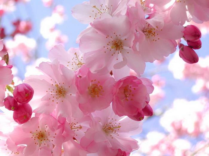 صور أجمل زهور
