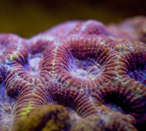 كآئنات البحر الأحمر