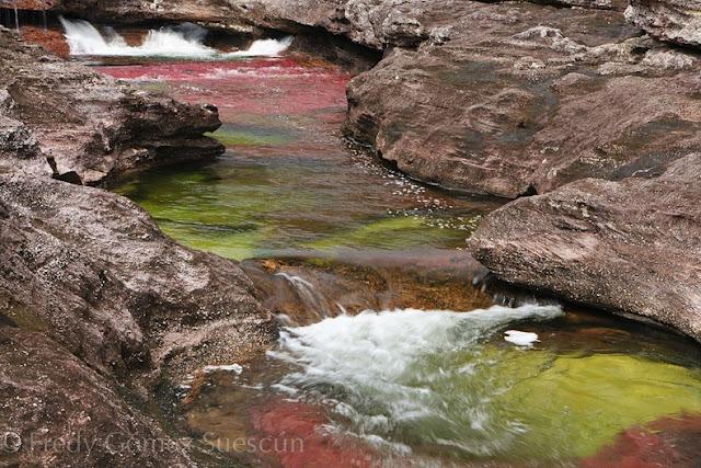 نهر كانو كرستيال اجمل الانهار بالعالم