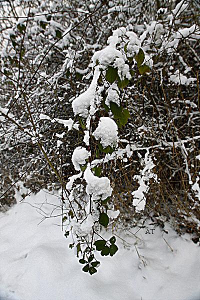 نهار رومانسي جليدي زمهريري فوق مرتفعات فيردا الجبلية