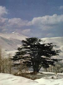 لبنان ^^
