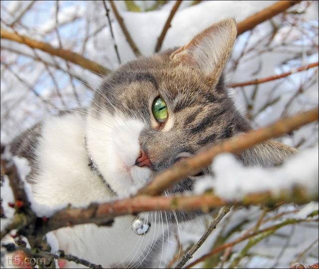 القطط والثلج
