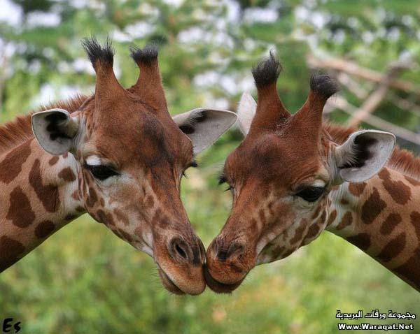 صور حيوانات في الغابة - صور تجعلك كأنك تراها بعينك