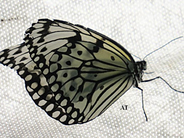 رحلتي الرومنسية الجميلة إلى عالم الفراشات في يومي 8 و 10 حزيران 2013