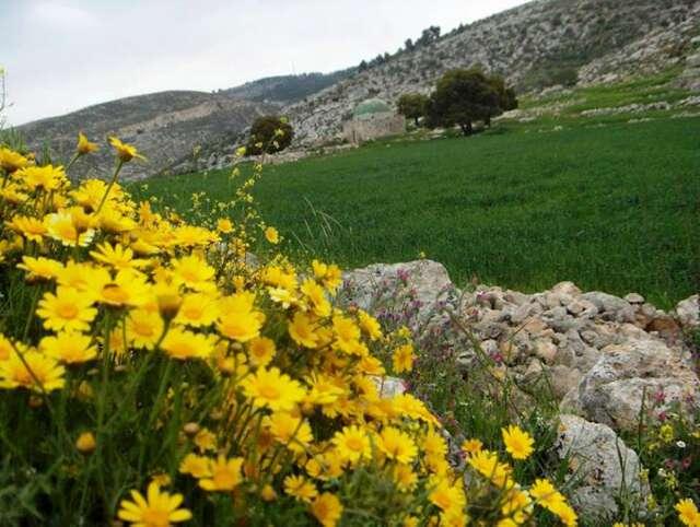مناطق في فلسطين