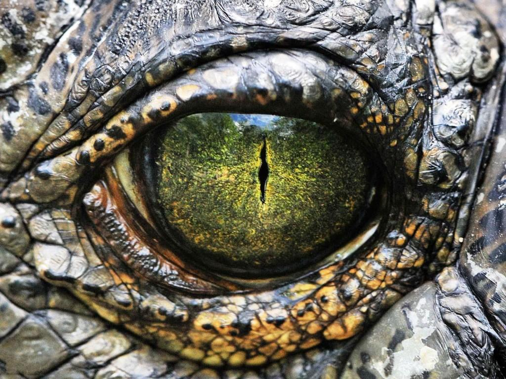 صور عين تمساح