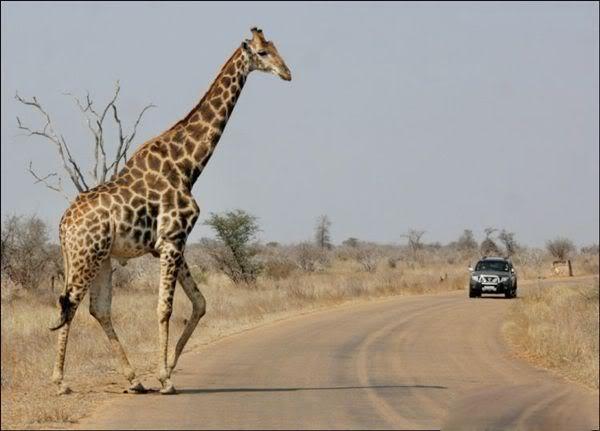 شوارع إفريقيا الخطرة