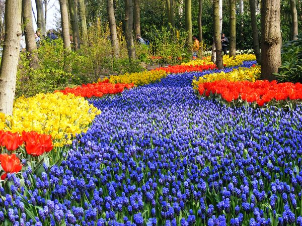 حديقة كيوكينهوف - هولندا