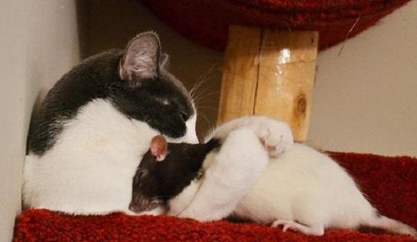 حيوانات تأخذ غفوة مع أعدائها بعد تحولهم لأصدقاء