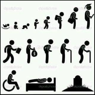 Human life cycle stages ages - photo#41