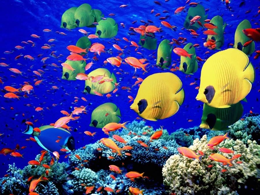 صور حيوانات وطيور وأسماك