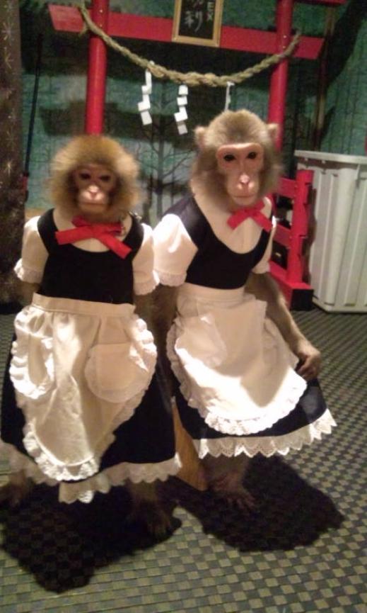القرود جرسونات فى مطعم يابانى شهير