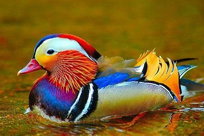 اجمل الصور الطبيعية