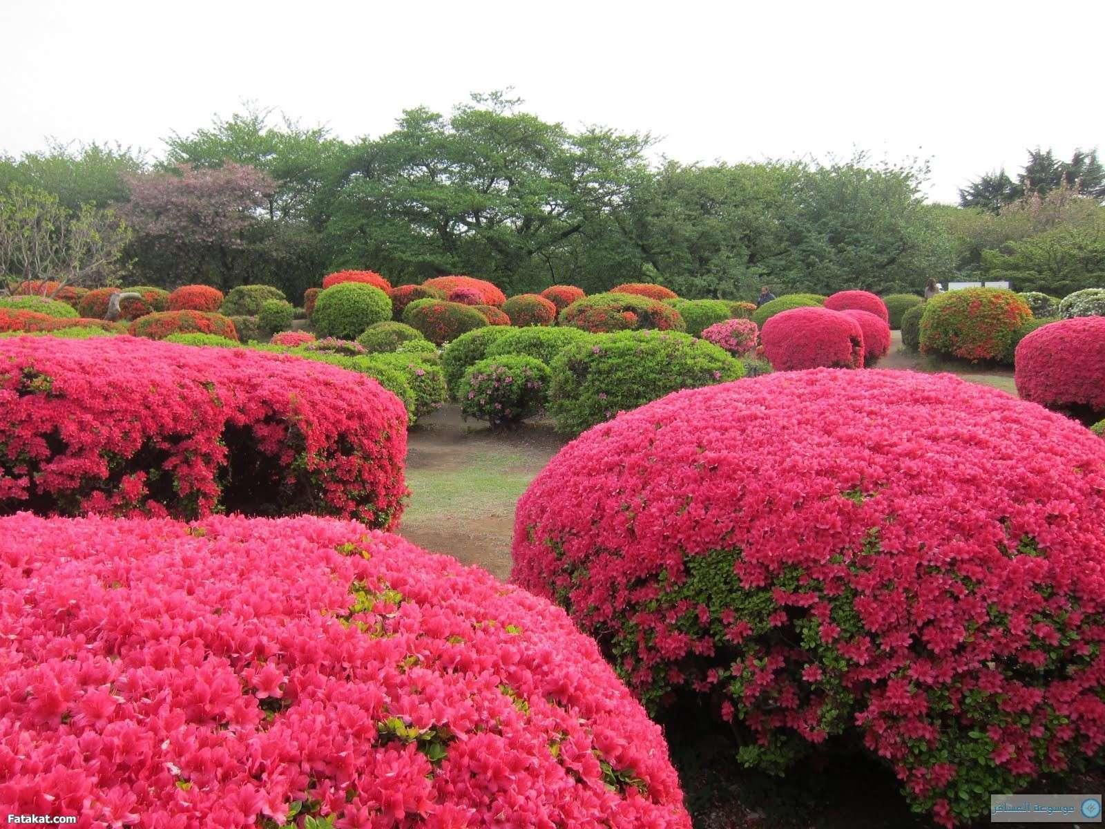 صور ازهار جميله