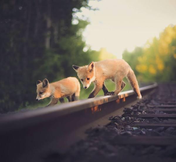 الحيوانات البرية عن قرب